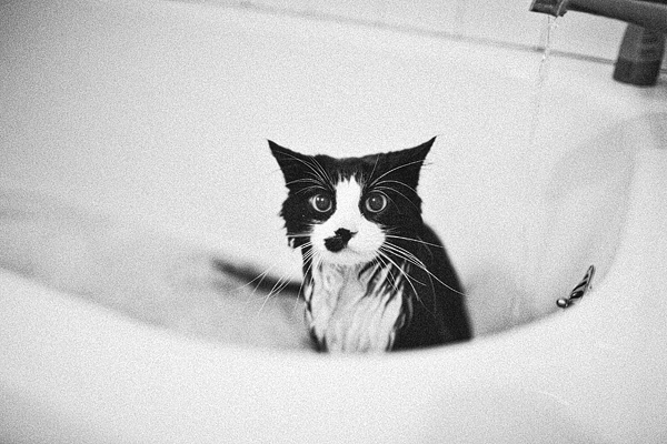 Kitty_Bath0012_Blog_S