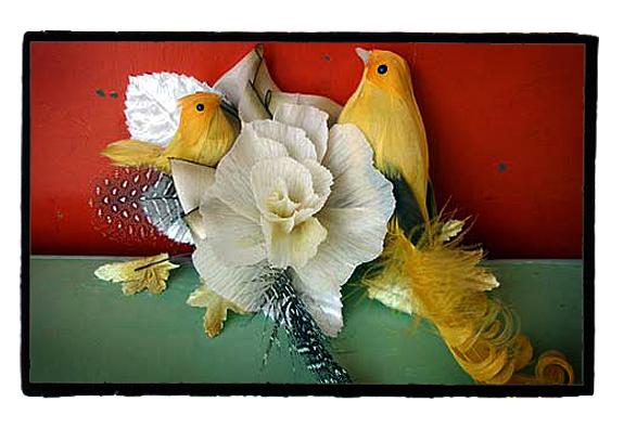Lauriecinottoetsybirds